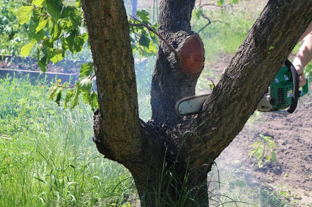 Спил дерева на участке
