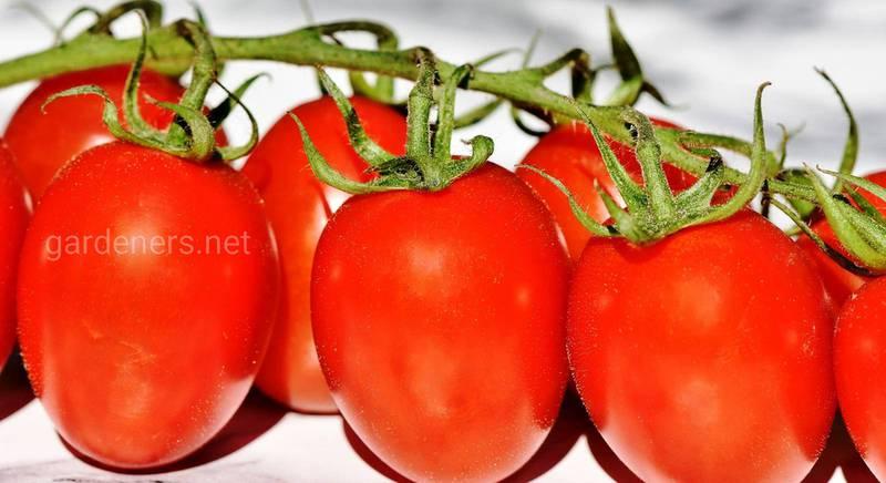Натуральные удобрения для помидора.jpg