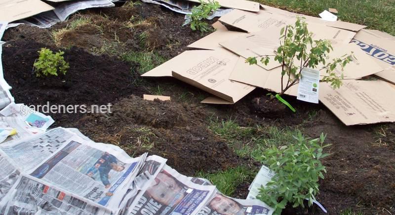 Як уникнути бур'янів, що ростуть навколо рослин?