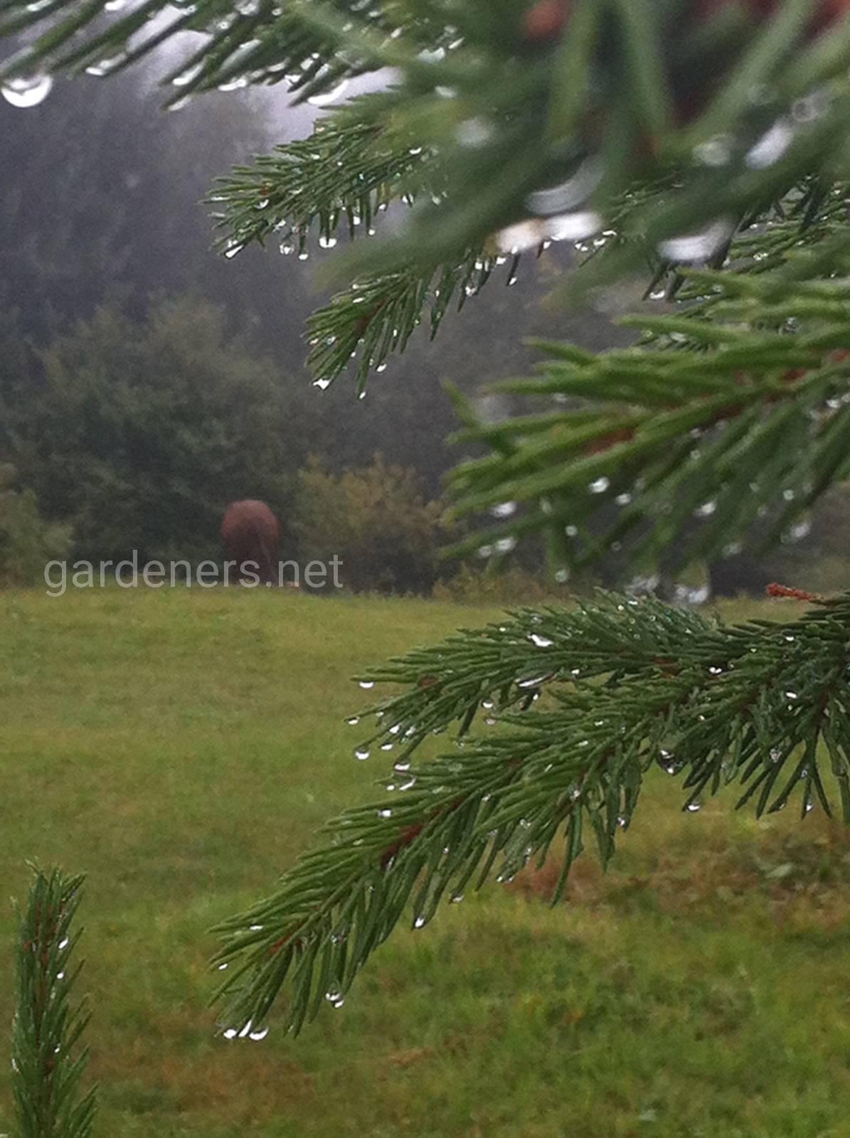 Дождливые Карпаты