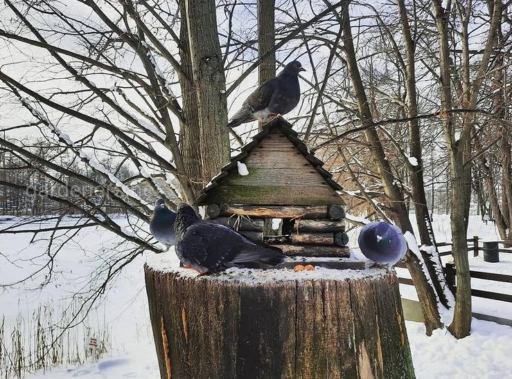 Витамины в рационе птиц