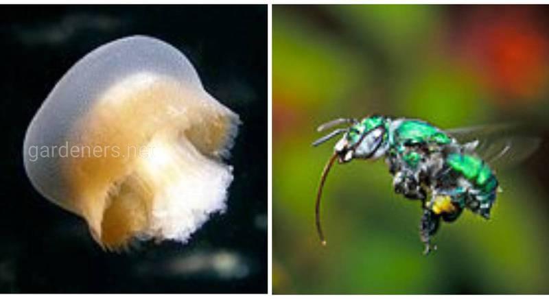 """Медуза и пчела по имени """"Бугага!"""""""