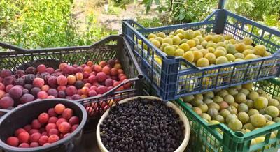 Александр Лунёв Коллекционер плодовых деревьев