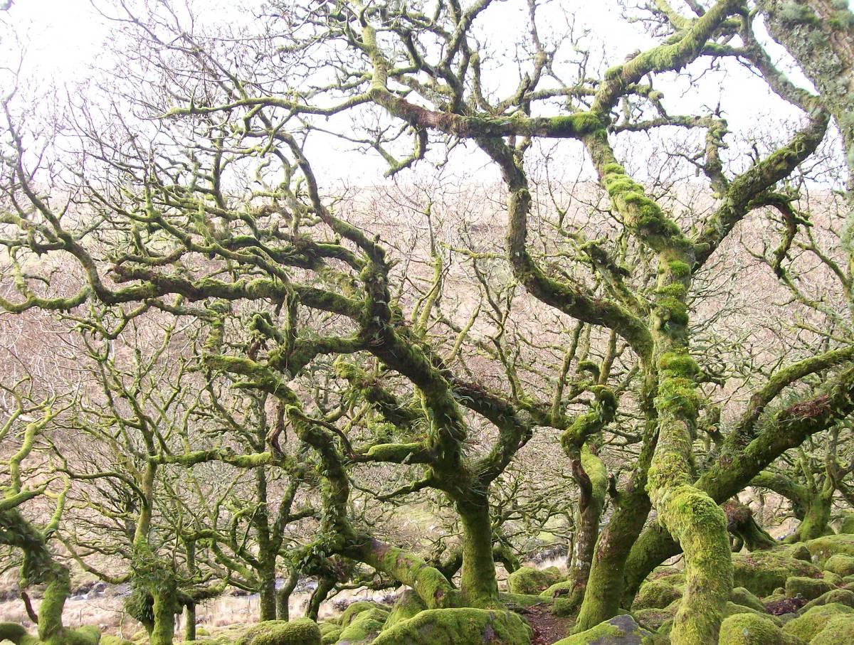 Деревья-чудовища