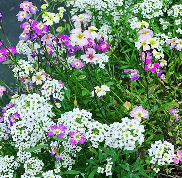 Використання на садових територіях