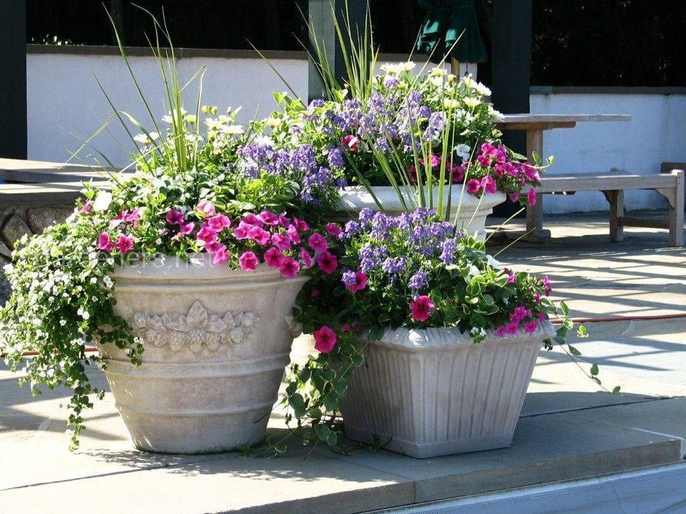 Контейнерний квітковий сад
