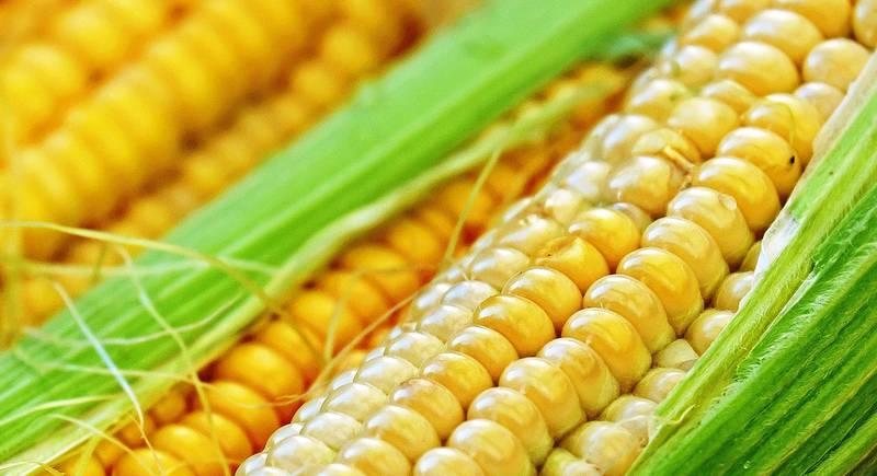 corn-1605664_1920.jpg