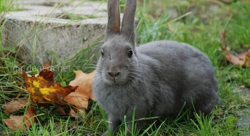 Всё о маточнике для кроликов своими руками