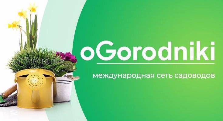 Потенциал раздела ФОТО на Огородниках
