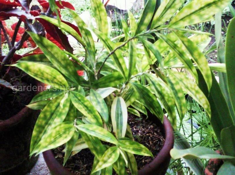 Як регулювати вологість для кімнатних рослин?