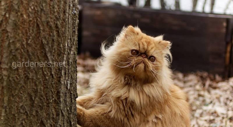 Як правильно вибрати кота в розпліднику: фахівці радять