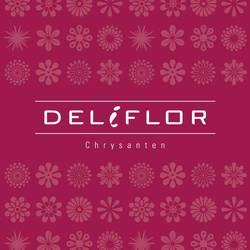 Deliflor Chrysanten