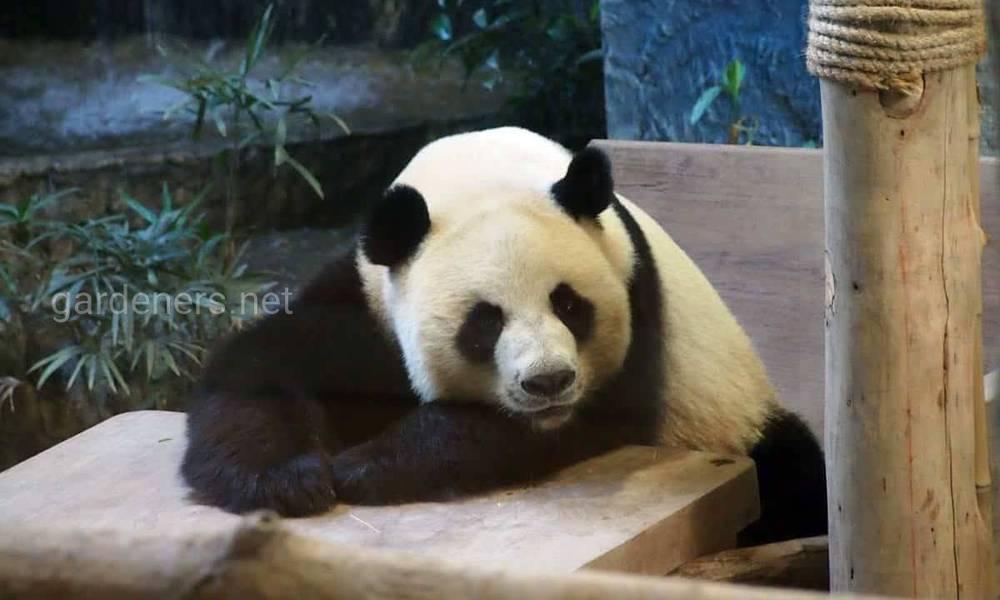 Зоопарки которые вам стоит посетить