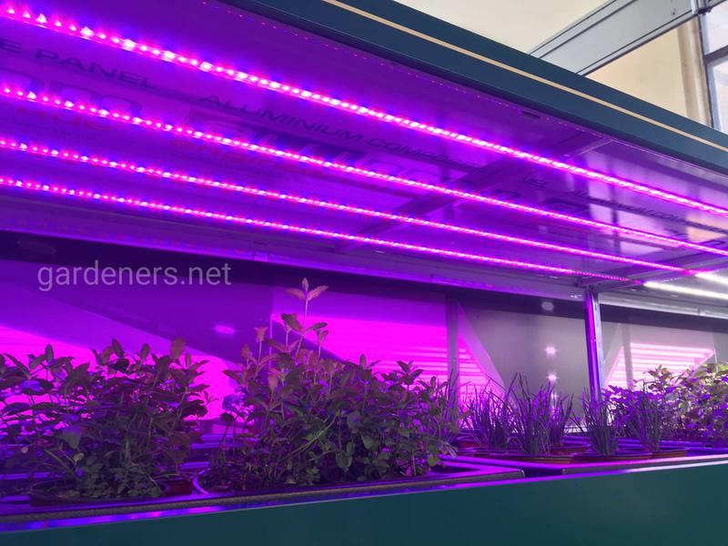 Які лампи можна застосовувати для штучного освітлення рослин взимку? Як правильно розміщувати?