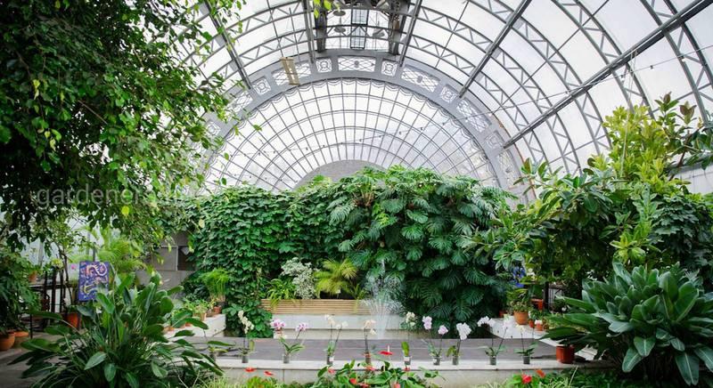 История возникновения оранжерей, их отличие от теплиц и зимних садов