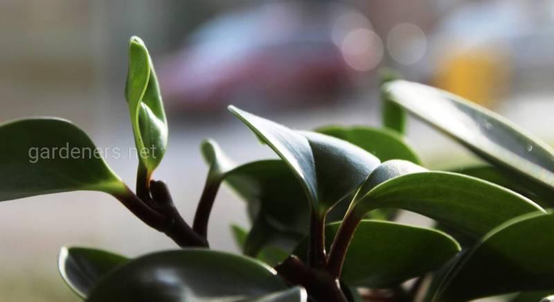 ТОП-6 проблем при выращивании комнатных растений