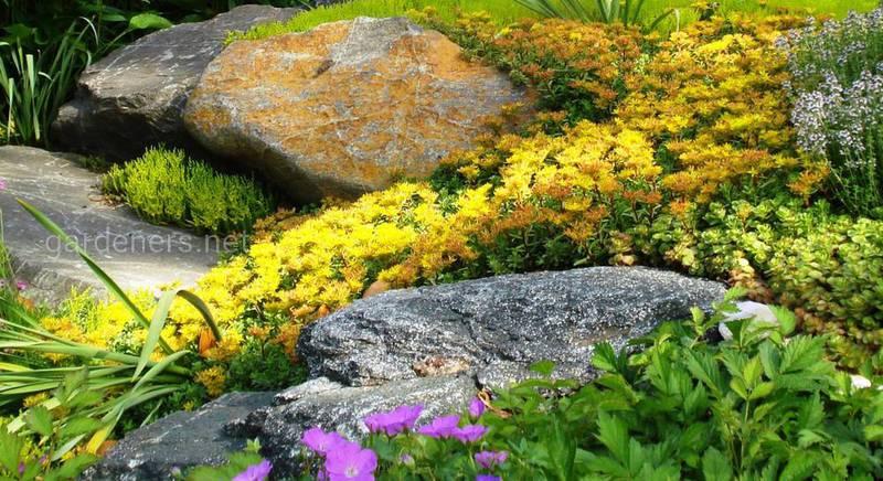 альпийский сад 3.jpg