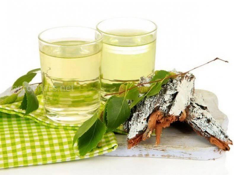 Как приготовить березовый чай? Рецепты и применение при различных заболеваниях