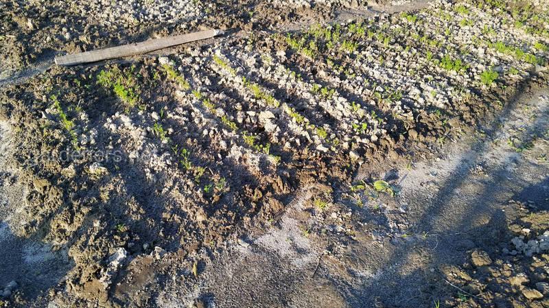 Какая категория почвы является лучшей для обработки?