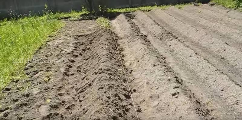 Как влияет чрезмерная кислотность и щелочность почвы на растения?