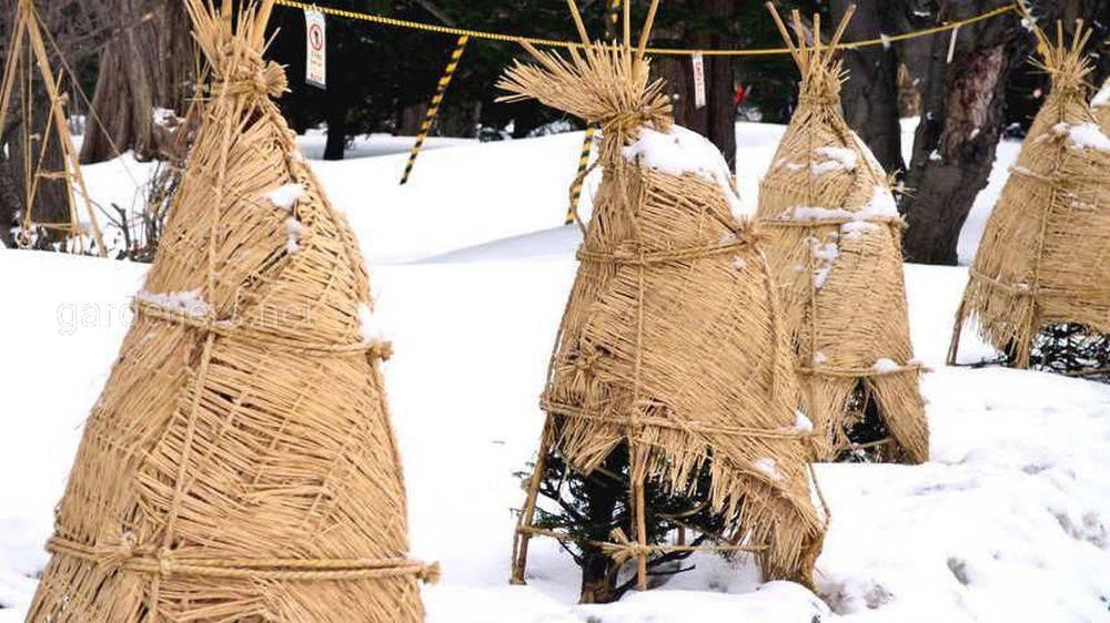Варіанти укриття рослин на зиму
