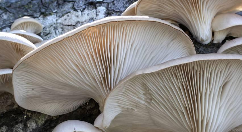 Блюда с грибами вешенками | 465x852