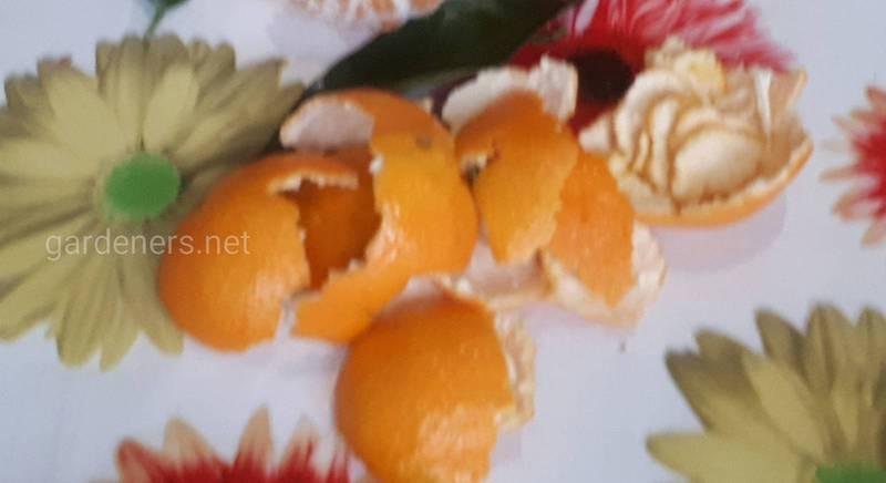 Чем полезна кожура от мандарин?