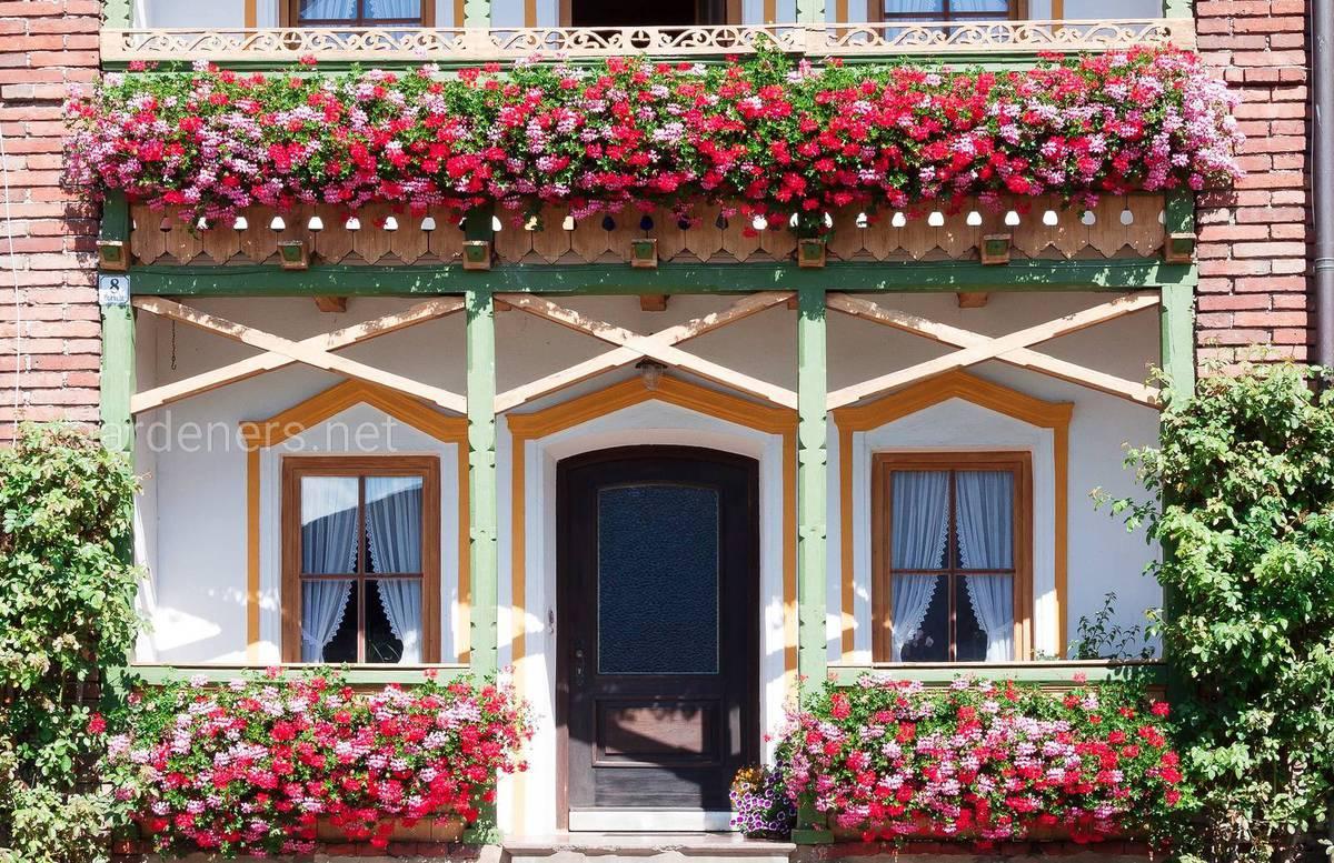 лучший зеленый балкон
