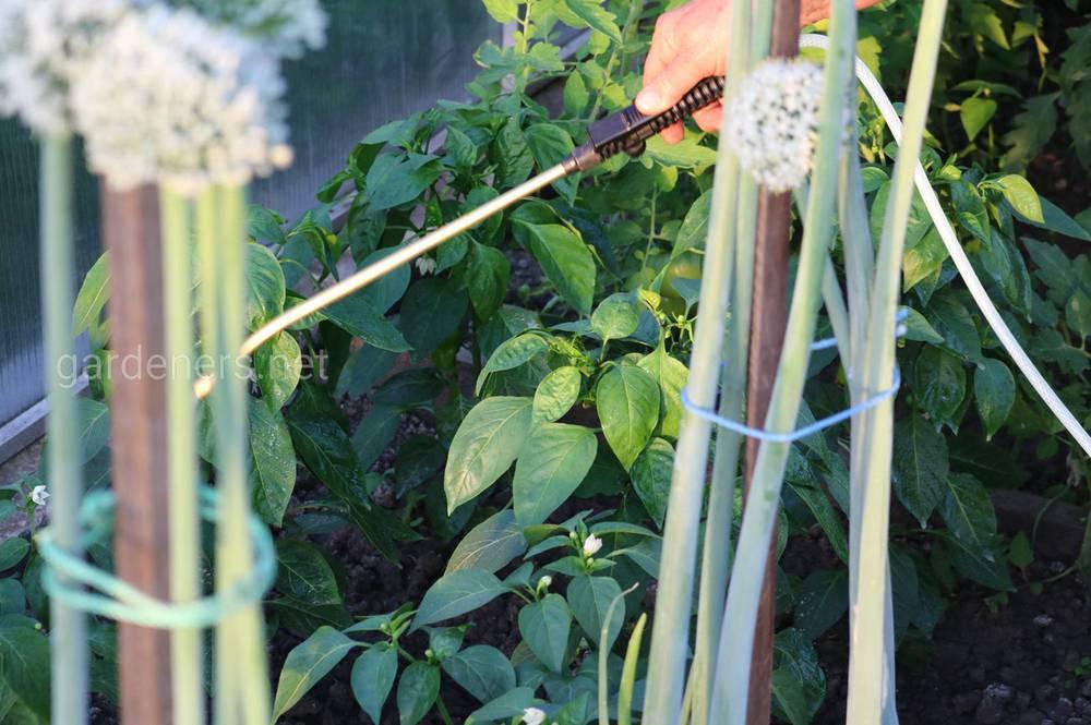 Нордокс используется на овощных культура