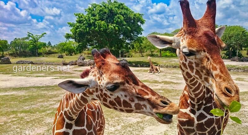 Зоопарк в Майами: кого можно увидеть и как отдохнуть