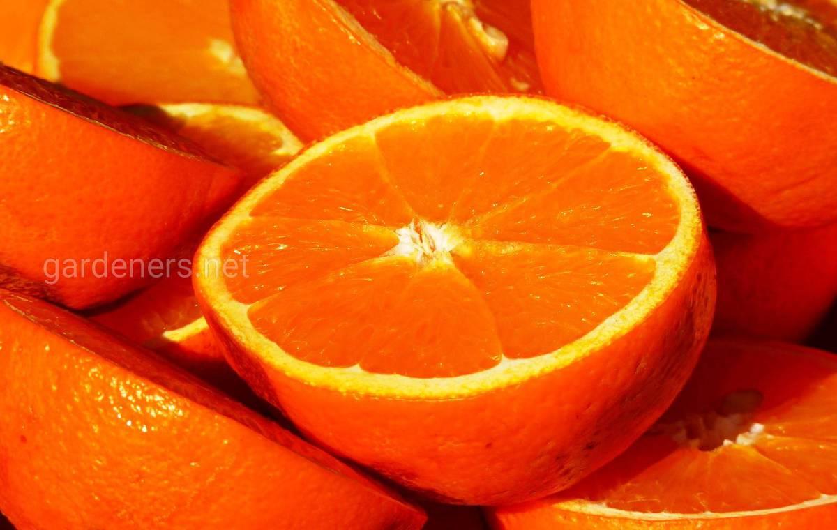 оранжевый апельсин