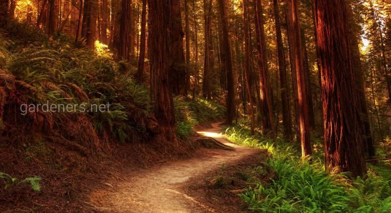 14 интересных фактов о лесах и деревьях