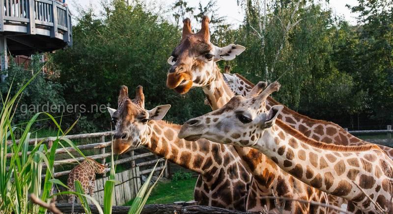 Пражский зоопарк: особенности и жители