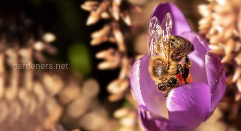 Пока есть растения, будут и пчелы