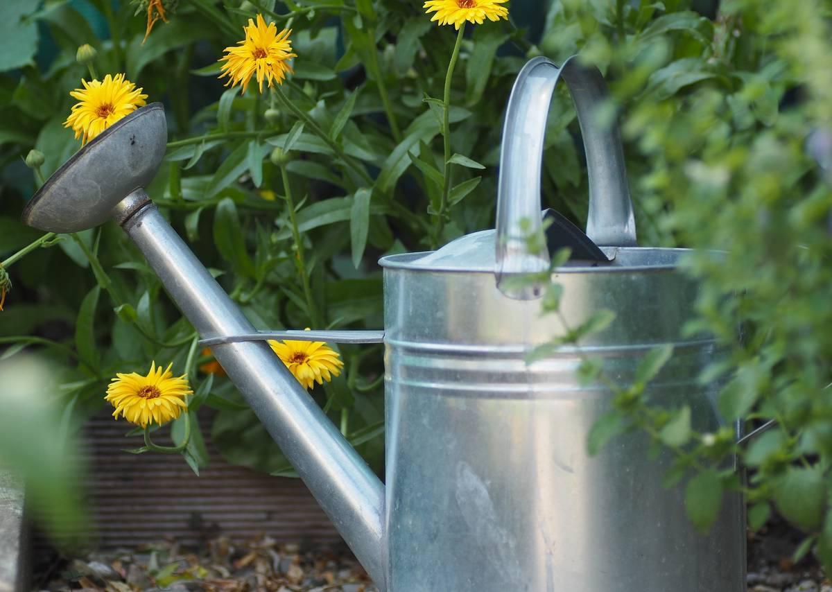 полив - садовые работы в июле