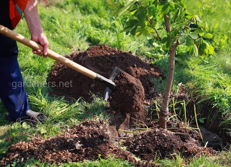 Чому осінь ідеальний час для посадки дерев?