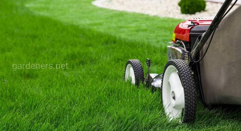 Боронирование газона. Инструменты для стрижки газона