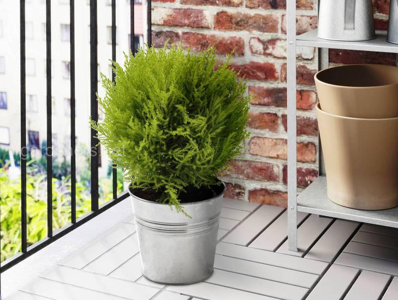 Коли і куди ставити рослини та квіти в приміщення на зимівлю?
