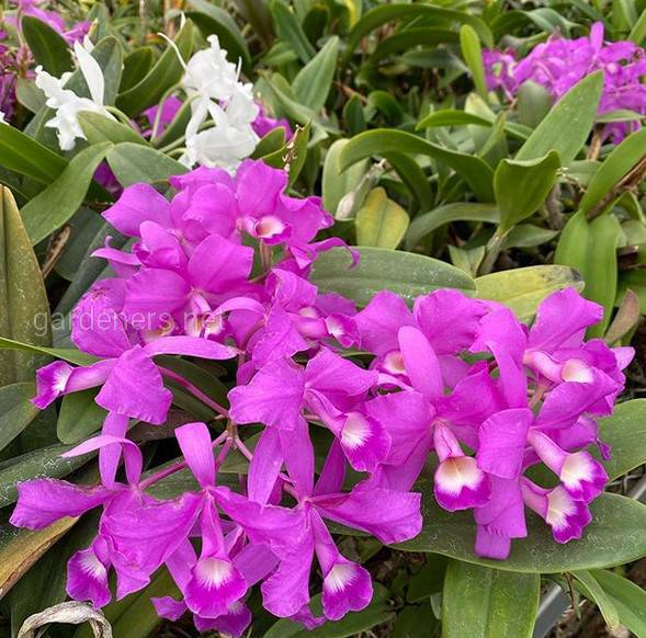 Какой вред наносят и как бороться с многоножками и коллемболами на орхидее?