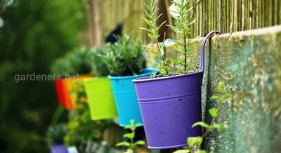 Создание сада в горшках и уход за ним. Как перезимовать горшочному саду?