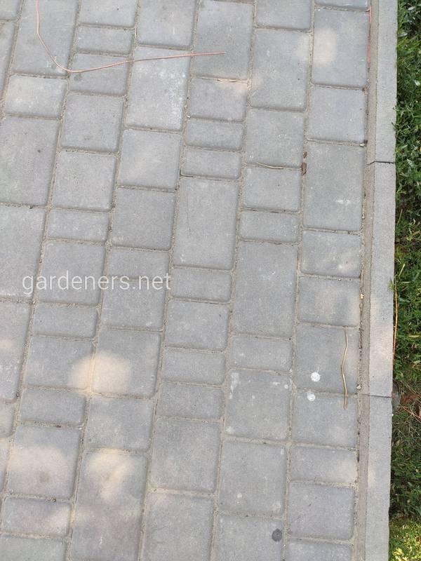 Як позбавитися від бур`янів в швах тротуарної плитки народними методами
