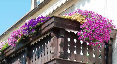 Самый зеленый балкон.jpg