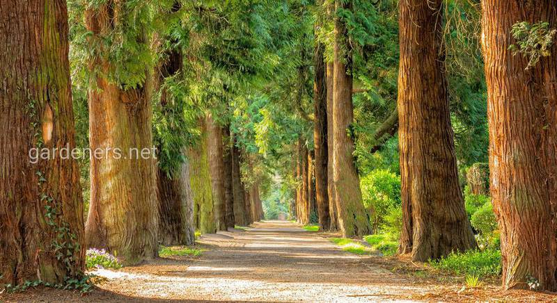 Советы от Игоря Сингера по уходу за деревьями