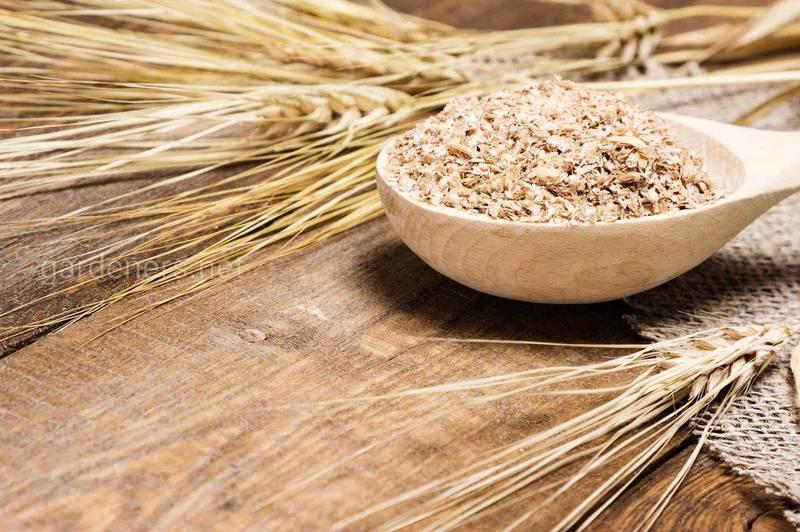 Топ-11 интересных фактов о пшенице