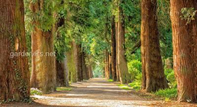 деревья.jpg