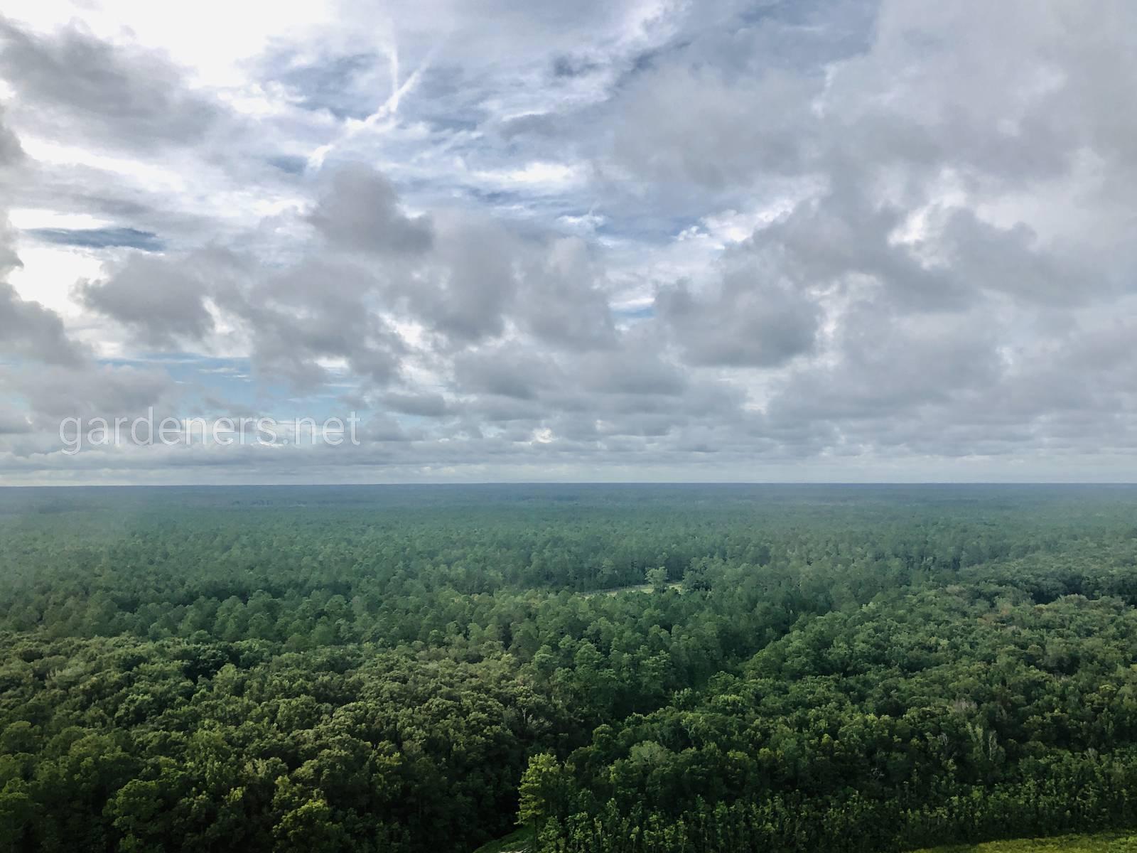 Джунгли Флориды, США
