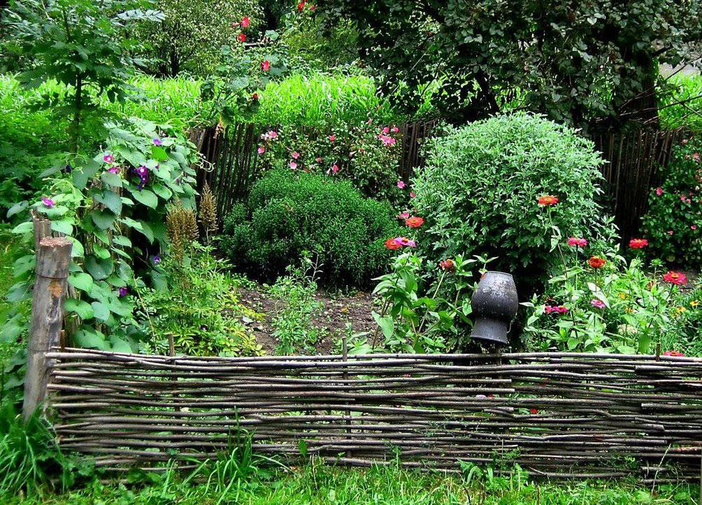 тын в саду