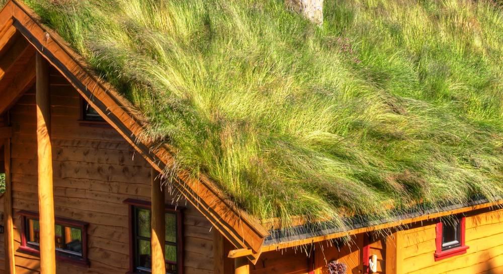 зеленая крыша.jpg