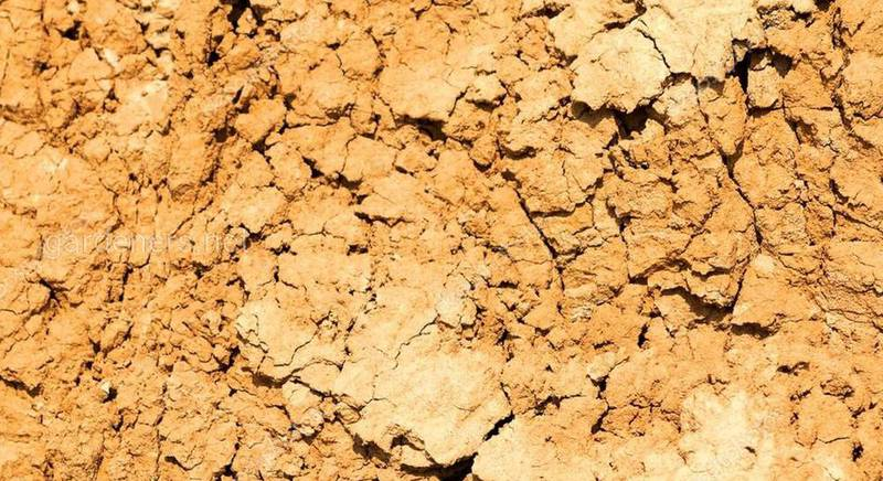 глинистая почва.jpg