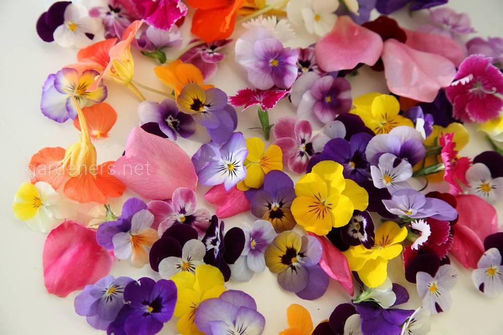 Съедобные цветы